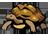 لاک پشتهای زمینی (آشنایی، تغذیه و نگهداری مناسب لاک پشت زمینی)